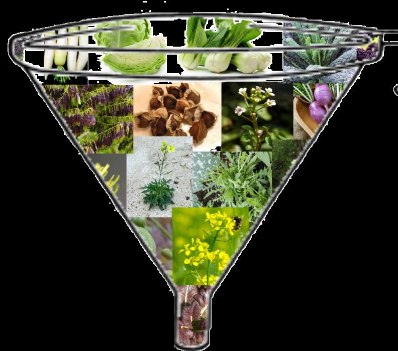 Tecniche agricole Green- La Biofumigazione