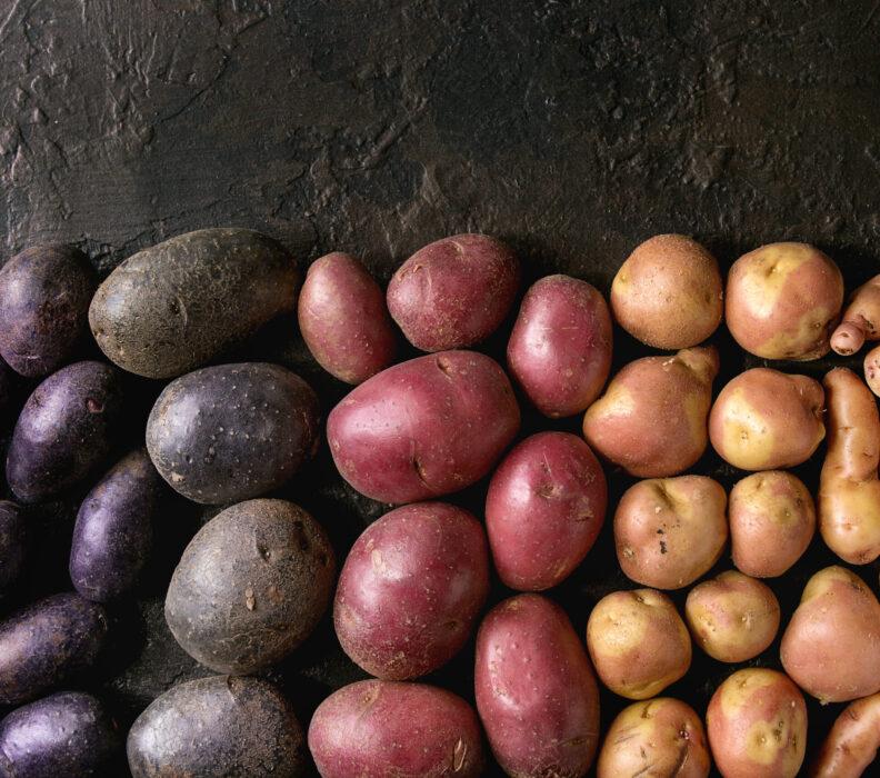 La Notte dei Ricercatori 2021: il CREA racconta i mille aspetti della coltura della patata